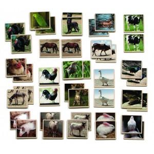 Pexeso - Domáce zvieratá