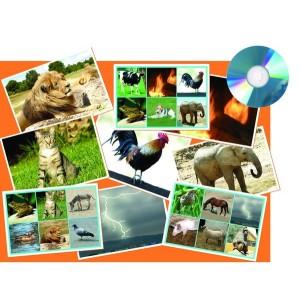 CD Bingo - Zvuky zvierat